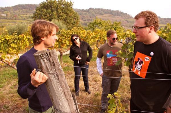 maule vines