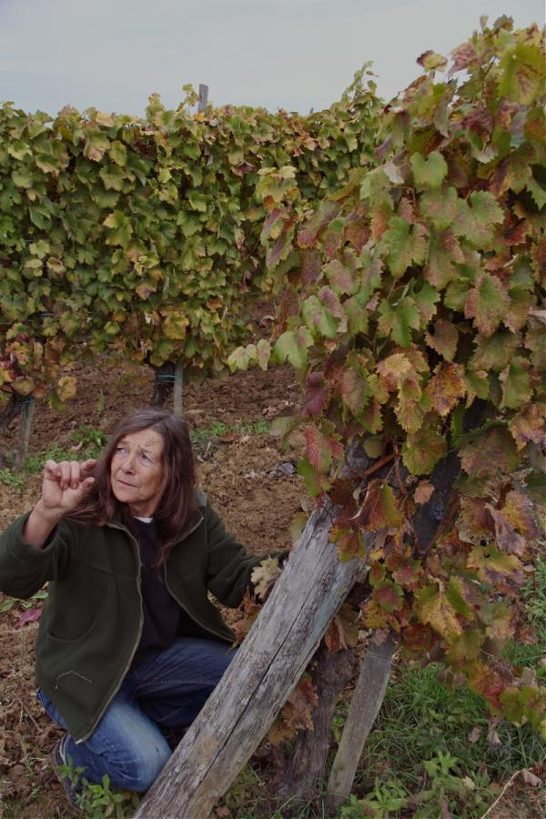 dora in the vines